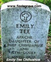 Emily Tee Chihuahua