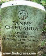 Fanny Chihuahua