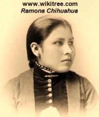 Ramona Chihuahua