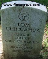 Tom Chihuahua